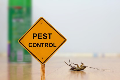 Pest Contol in Kilburn, Queens Park, West Hampstead, NW6. Call Now 020 8166 9746