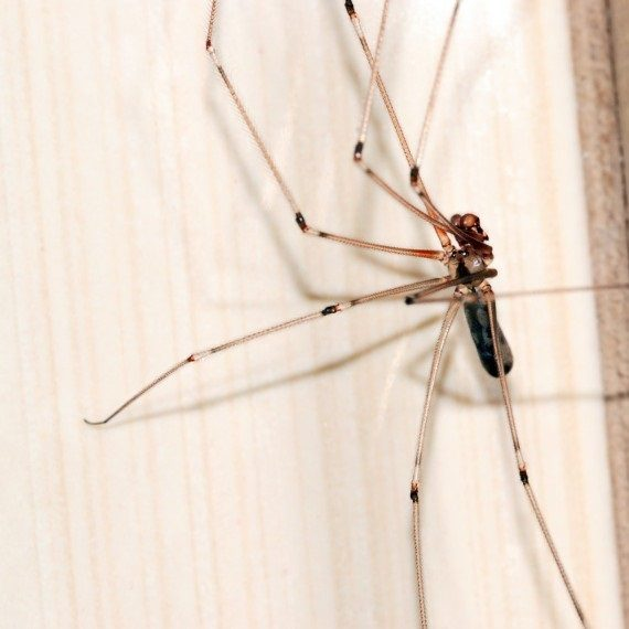 Spiders, Pest Control in Kilburn, Queens Park, West Hampstead, NW6. Call Now! 020 8166 9746