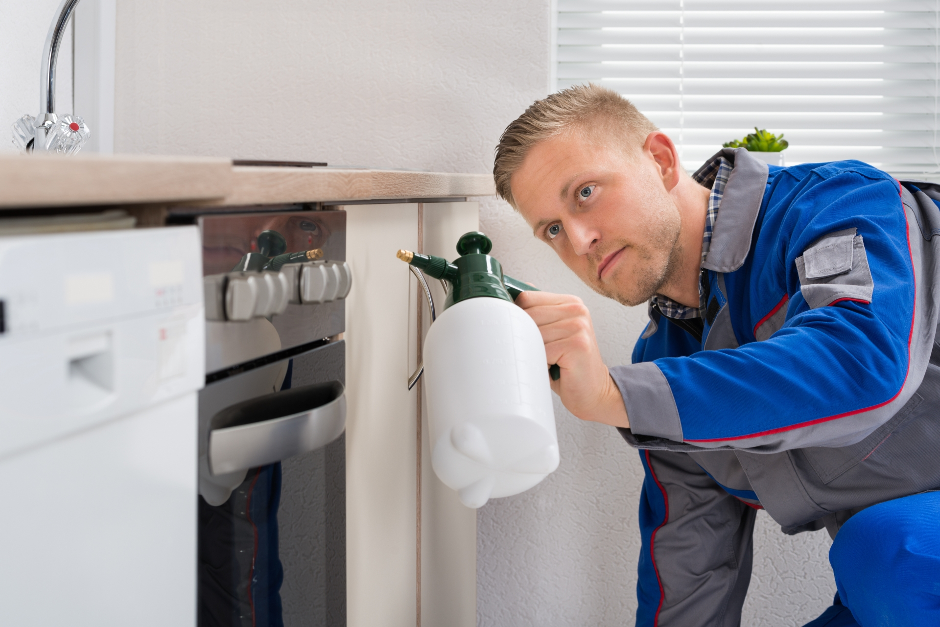 Pest Inspection, Pest Control in Kilburn, Queens Park, West Hampstead, NW6. Call Now 020 8166 9746