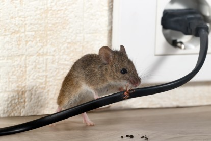 Pest Control in Kilburn, Queens Park, West Hampstead, NW6. Call Now! 020 8166 9746